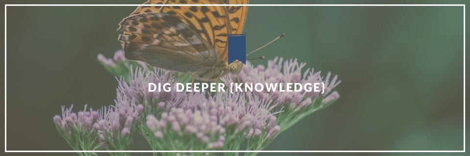 Dig Deeper {Knowledge}